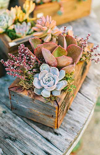 DIY Terrarium Garden Party - Inspired by This