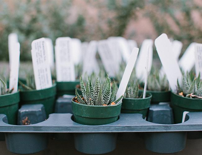 DIY Terrarium Garden Party - Inspired by This21