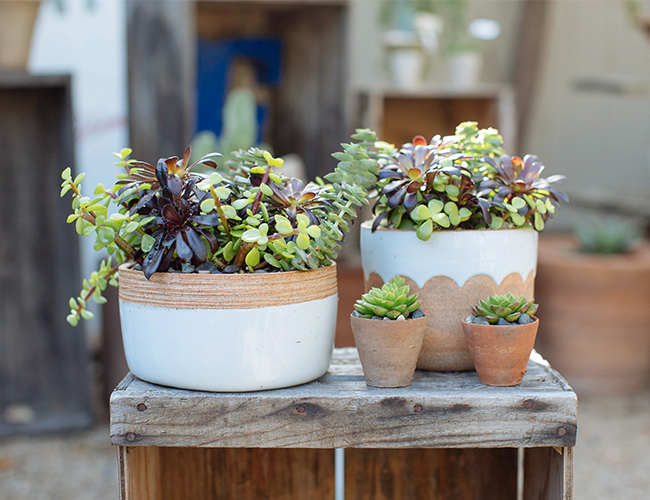 Creating the Perfect Succulent Arrangement with Molly Wood - Inspired by This