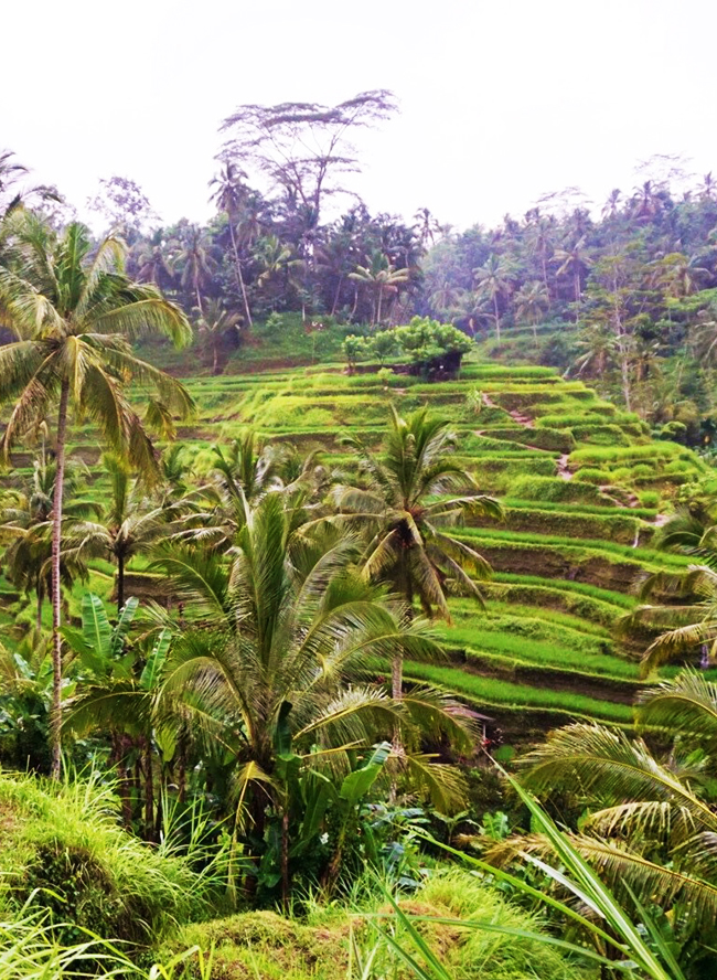 Our Travel Guide to Bali, Indonesia - Inspired by This