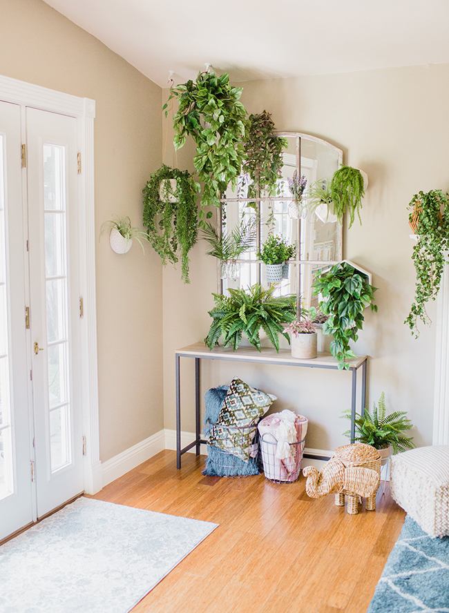 A DIY Living Plant Wall Installation