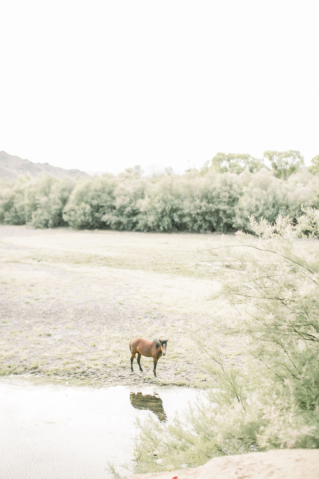 A One Year Anniversary Photoshoot with Wild Horses - Inspired by This